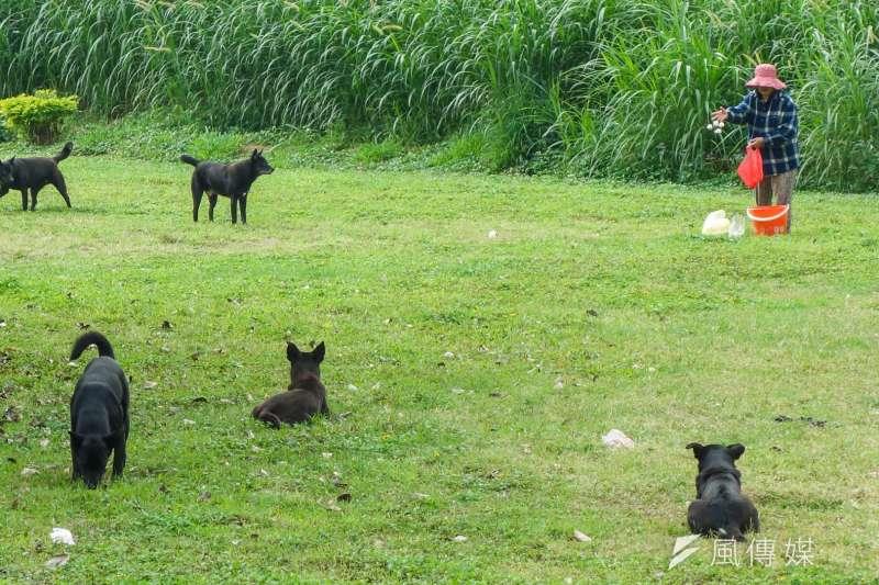 嘉義朴子地區傳農地主人虐待幼犬案,台灣動物緊急救援小組3日收到檢舉後,已通報相關單位追查虐狗人的身分。圖為示意圖,非關當事人。(資料照,陳明仁攝)