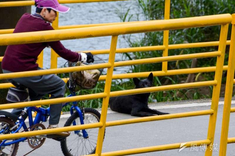 3.專題配圖-流犬專題-流犬端詳著騎著腳踏車的人們.(陳明仁攝)