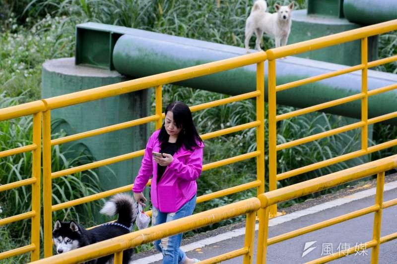 28.景美溪畔步道上.流犬看著民眾牽著毛小孩經過.欄杆裡外命運大不同..(陳明仁攝)