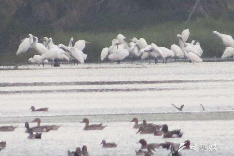 冷氣團報到,鰲鼓濕地冬候鳥賞鳥好時機。(圖/謝敏政攝)