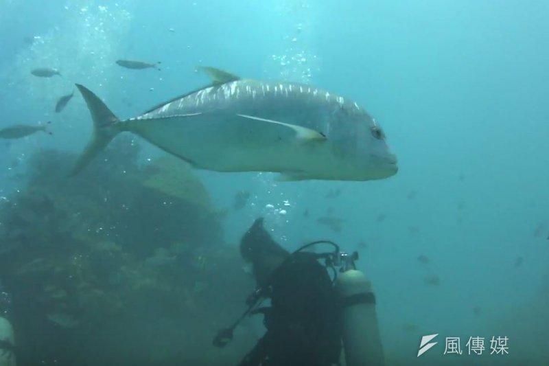 墾丁後壁湖的牛港鰺「阿牛」是備受當地潛水客喜愛的水中明星。圖為示意圖。(資料照,取自youtube)
