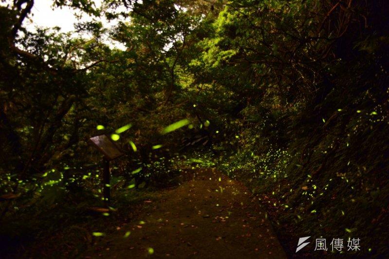 海大龍崗生態步道,每年四、五月是螢火蟲的繁殖季,正是賞螢的最佳時期。(圖/海洋大學提供)