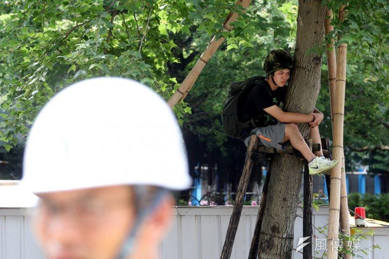 台北市政府、遠雄今天將進行大巨蛋周圍33棵行道樹斷根工程,護樹團體不滿遠雄公安未改善完成、也未重新議約就要移樹,在遠雄、市府人員現勘時,爬上樹抗議。(蘇仲泓攝)