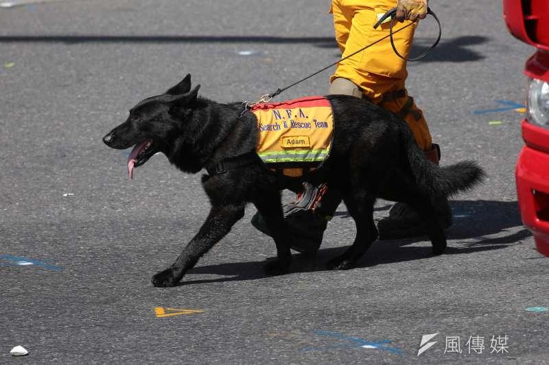 中華民國106年國慶典禮於總統府前舉行,消防人員牽著搜救犬伴隨消防署花車出場。(示意圖,非當事犬隻/顏麟宇攝)