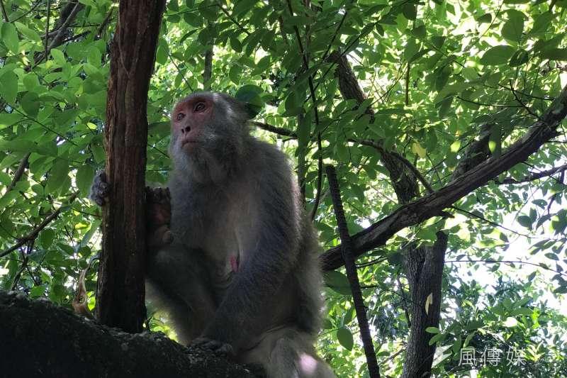 猴子、貓狗、老鼠都時常被作為動物活體實驗,在非動物實驗已是趨勢後,台灣還要觀望多久?。(呂紹煒攝)