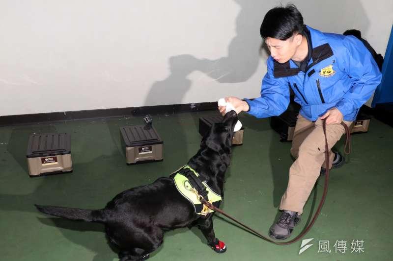 憲兵指揮部安排警衛大隊軍犬分隊接受媒體訪問,演練開始後,由領犬員帶領犬隻搜索帶有爆裂物氣味的物品,待成功發現爆裂物後,犬隻會得到毛巾捲等玩具當作獎勵。(蘇仲泓攝)