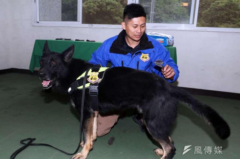 20180201-憲兵指揮部日前安排警衛大隊軍犬分隊接受媒體訪問,現場也介紹領犬員平時針對軍犬的保健工作,例如每日梳毛。(蘇仲泓攝)