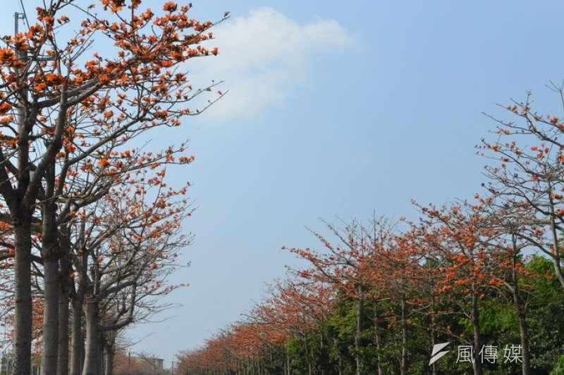 雲林崙背鄉已連4年舉辦「木棉花文化節」,每年3月、4月份正是花季,花朵嫣紅亮麗、形成美麗景致,目前雲11縣道兩旁的木棉花正綻放,是民眾欣賞美景的好所在。(圖/雲林縣政府提供)