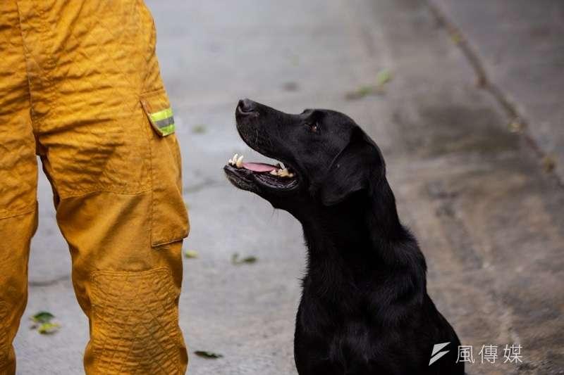 台灣在災害現場上,有六分之一的任務類型需要依賴搜救犬的搜救與救援能力