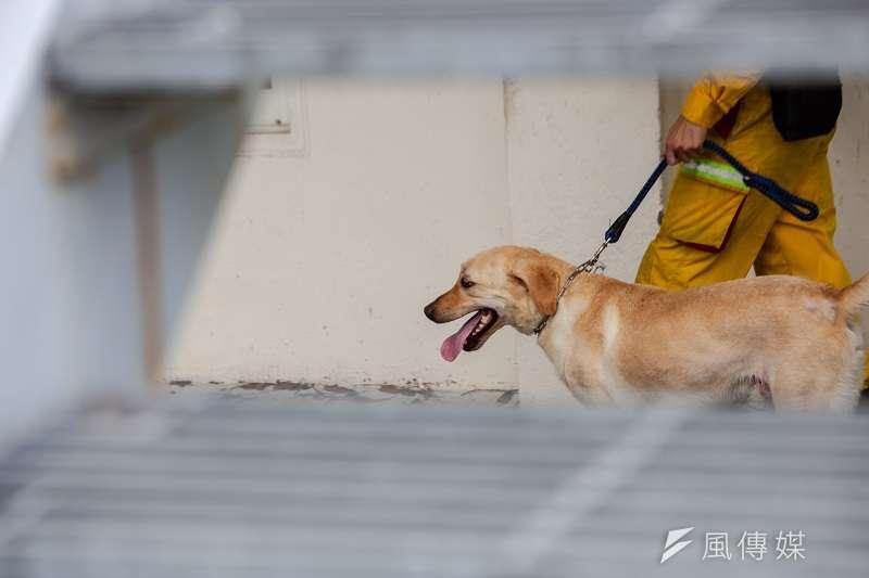 搜救犬需要臨危不亂的特質,尤其要不害怕踏入危險災區。(圖/屏東縣政府消防局 )