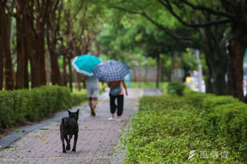 中央氣象局預報員25日表示,今年第12號颱風「雲雀」已經形成,但不直接影響台灣天氣;各地依然是有午後雷陣雨的天氣型態,西半部高溫有機會達到攝氏35度。(資料照,陳明仁攝)