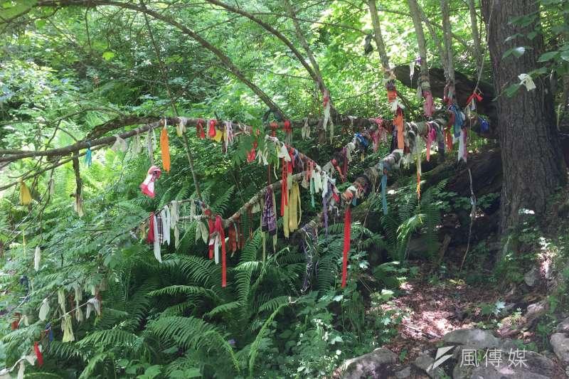 奧塞梯亞人仍保有傳統信仰,女性祭祀地點旁的樹上,綁滿單身女性祈求好姻緣的緞帶(簡恒宇攝)