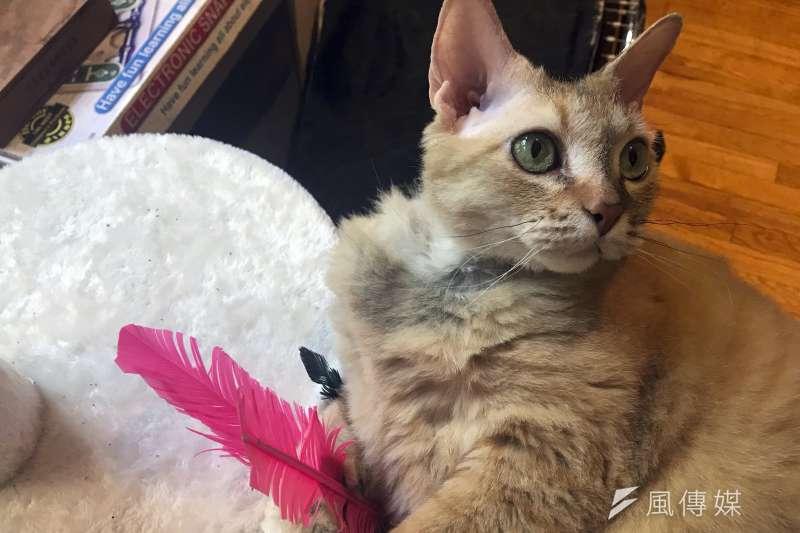 貓(AP)