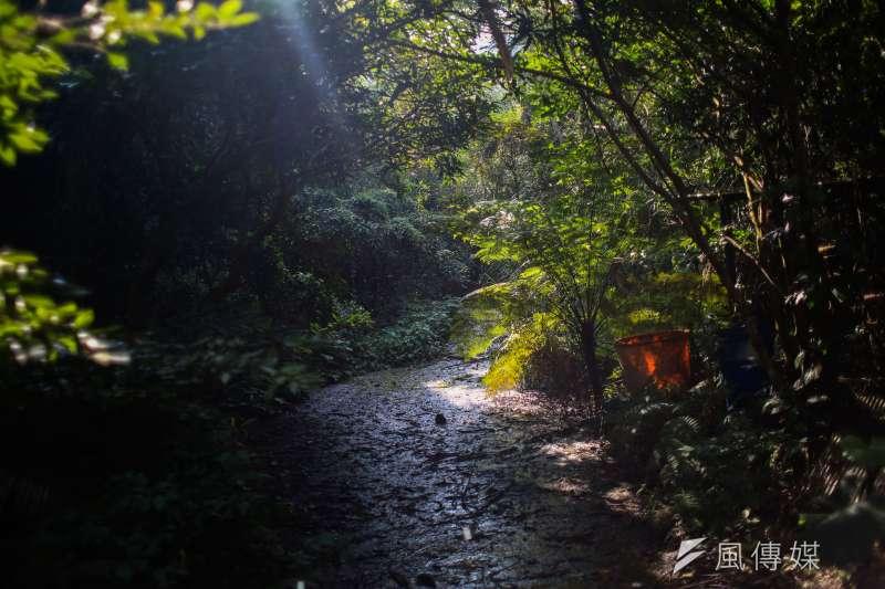 20190125-25日石虎專題配圖,生態環境。(簡必丞攝)