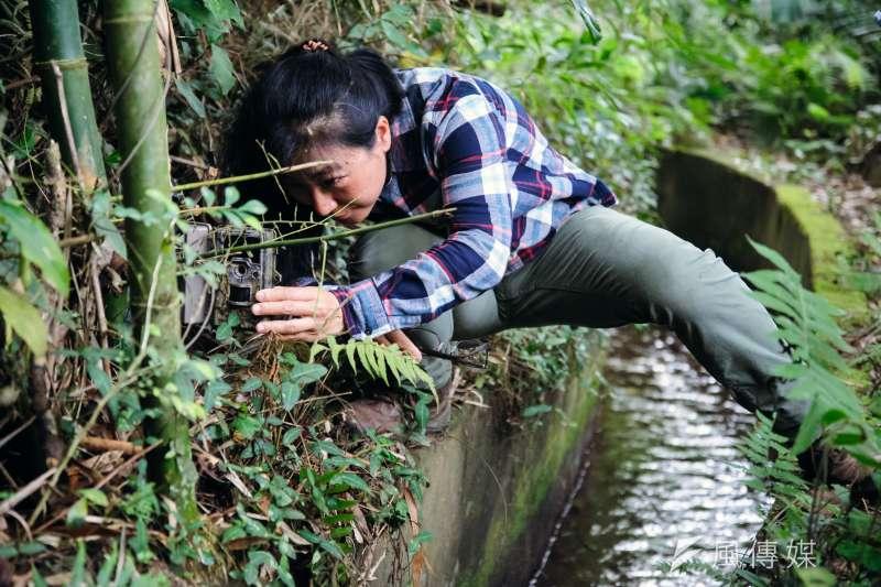 20190219-苗栗石虎專題,台灣石虎保育協會理事長陳美汀檢查自動相機的照片。(甘岱民攝)
