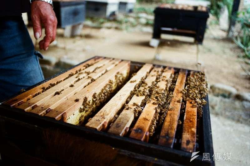 不少瓜農每季都向蜂農購買蜜蜂用於授粉,卻因不善養蜂,導致授粉效果不佳、或是讓蜜蜂輕易死去。示意圖。(廖羿雯攝)