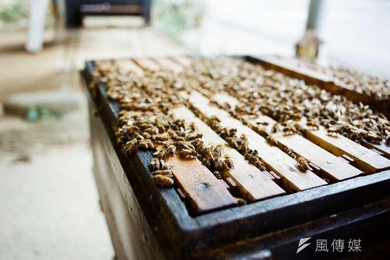 20190602 upload-羿雯專題-蜜蜂、蜂蜜、養蜂、蜂農。(廖羿雯攝)