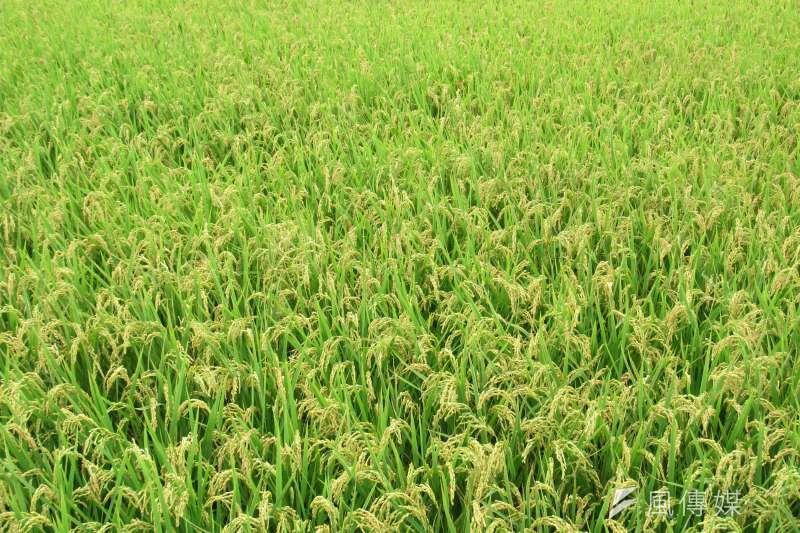 農委會為鼓勵農民投入有機農業,承租公有土地從事有機生產使用,可享有租稅優惠。(圖/趙筱蓓攝)