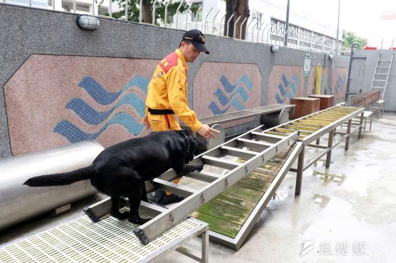 20190621-台北市消防局搜救隊暨搜救犬訓練中心17日啟用,領犬員引領搜救犬在基地內設施實施訓練,提升搜救能量。(蘇仲泓攝)
