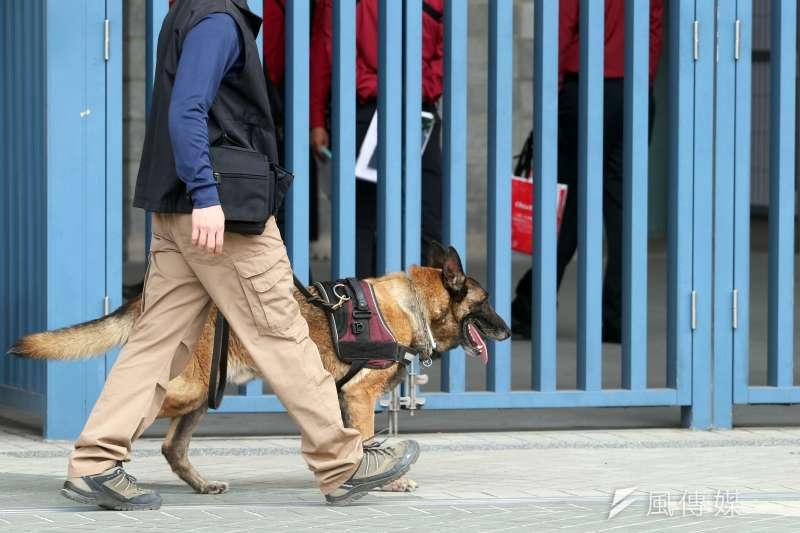 因防範非洲豬瘟有功,近來因在第一線執勤的檢疫犬被民眾讚為「護國神犬」。然而國內各部會其他工作犬也都負起重要責任,如圖為國防部憲兵指揮部警衛大隊軍犬分隊(見圖)日前執行總統蒞臨場所場檢工作,憲兵軍犬穿梭會場,不放過任何疑似爆裂物的可能,維護元首安全。(蘇仲泓攝)