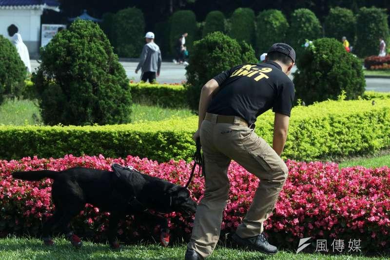 20190621-國防部憲兵指揮部警衛大隊軍犬分隊執行蒞臨場所場檢工作,憲兵軍犬穿梭會場,不放過任何疑似爆裂物的可能,維護元首安全。圖為憲兵軍犬在自由廣場執勤。(蘇仲泓攝)