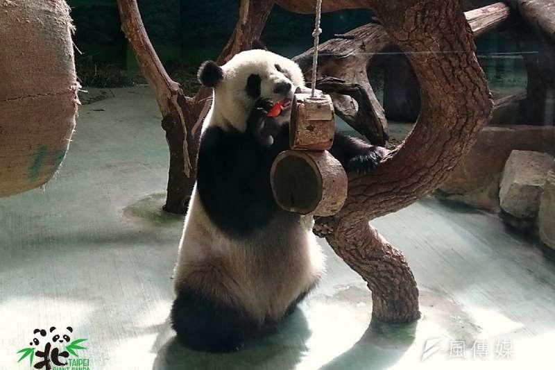 台北市立動物園休園10天,圓仔超想念大家!(取自台北市立動物園官網)
