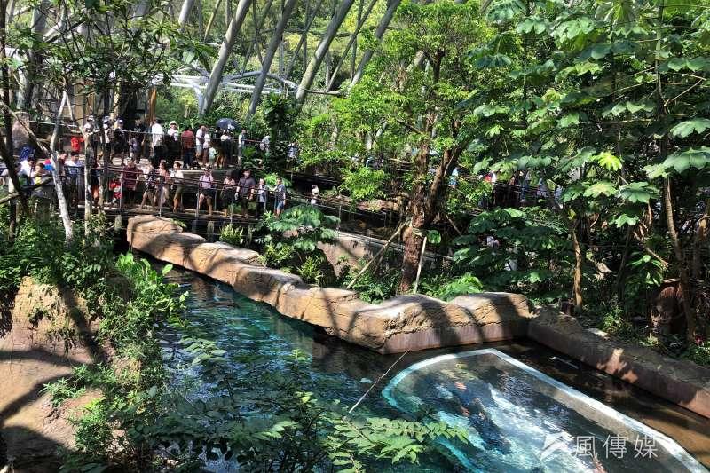 20190730-熱帶雨林館中,養象魚的大水缸,固定恆溫在攝氏28度,發言人曹先紹表示,在室內就好像在洗蒸汽浴一樣,即便是冬天,也不用擔心動植物會被低溫影響。(張雅如攝)