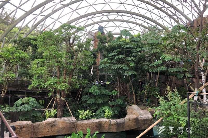 20190730-熱帶雨林館館內景象。(張雅如攝)