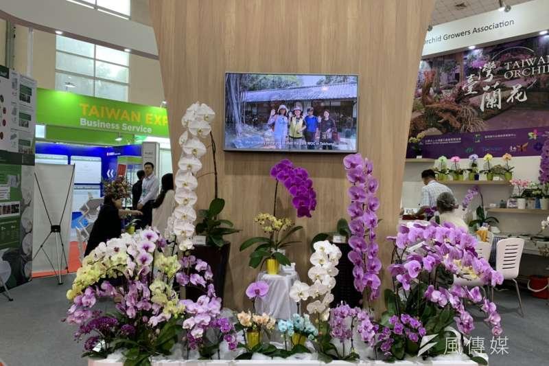 台灣蘭花產銷協會於今年河內台灣形象展中展出,秘書長曾俊弼表示,越南是台灣蝴蝶蘭的關鍵市場。(尹俞歡攝)