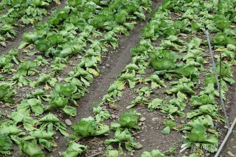 近期受到西南風影響連續降雨,提高災情確認困難,但市府仍持續積極查報農損。(圖/徐炳文攝)