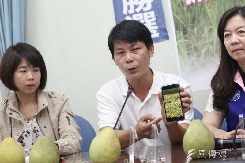 20190912-農民林佳新12日召開「農委會丟棄文旦抓到了!抓了!」記者會。(簡必丞攝)