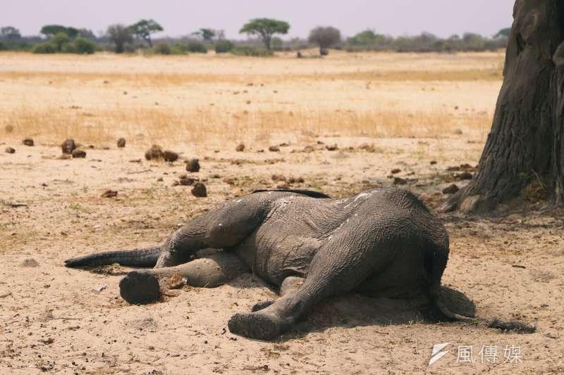 萬基國家公園內大象因水源不足渴死。(AP)