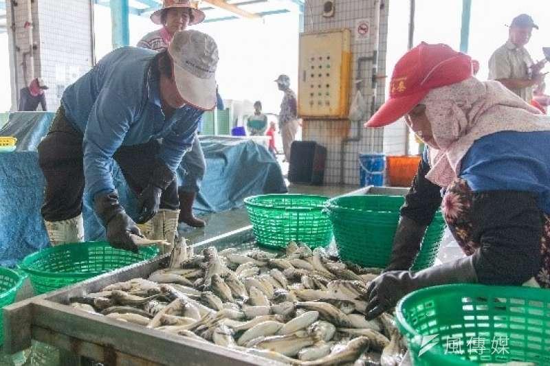 蚵仔寮港觀光漁市。(圖/徐炳文攝)