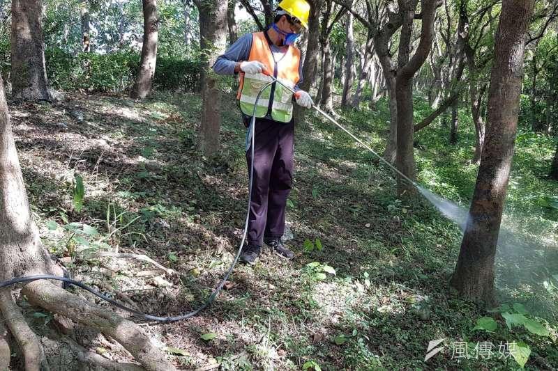 針對東豐自行車道行道樹,台中市府安排樹木病蟲害防治專家診斷,並清洗蟻道。(圖/台中市政府)