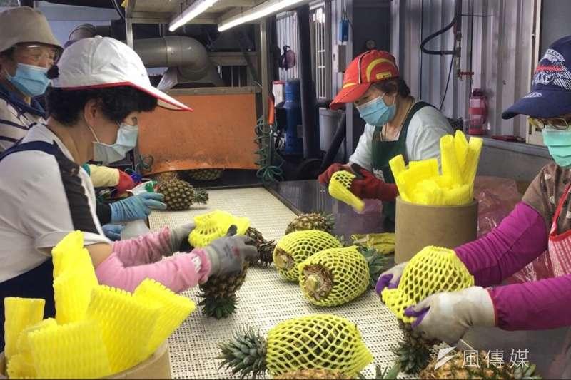 新北市前市長朱立倫質疑,2020年台灣鳳梨外銷對岸的數量是新南向國家的100倍,可見「推動新南向,避免過度依賴單一市場風險」,根本就是騙人的大內宣。(資料照,徐炳文攝)
