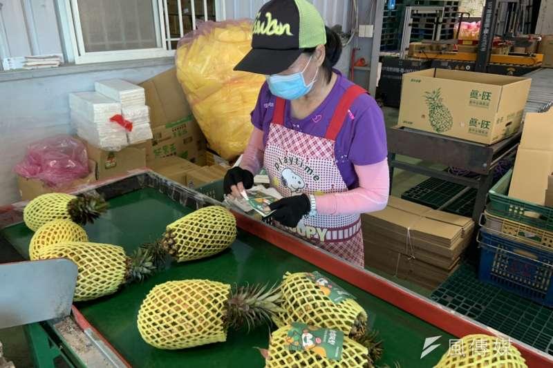 大陸宣布三月一日起暫時停止進口台灣鳳梨。 (資料照片,圖/徐炳文攝)