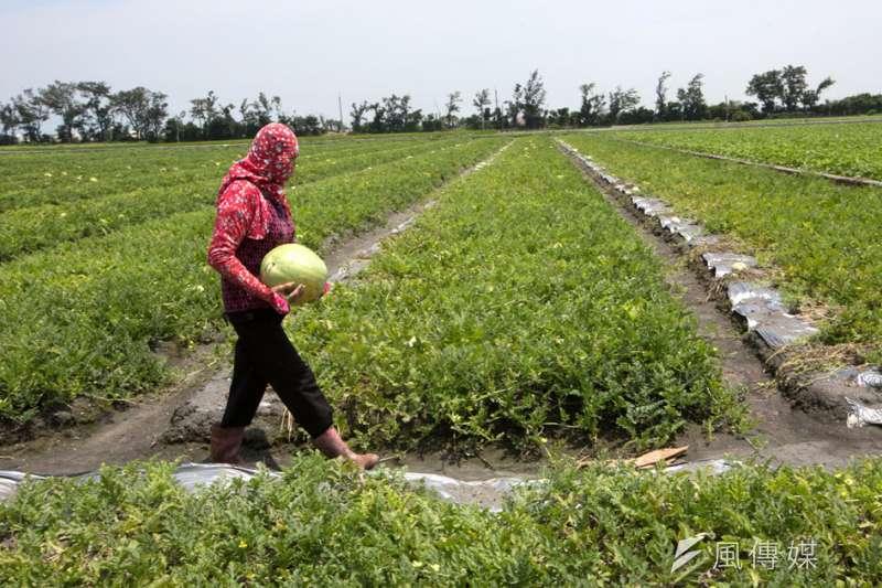 雲林縣政府提出「農業權入憲」訴求,強調保障農民權益應是由各縣市共同負擔。(新新聞資料照)