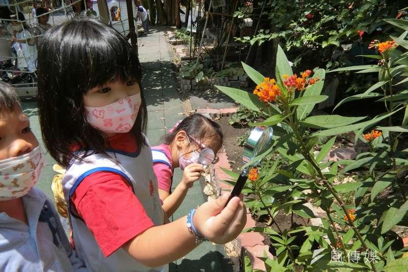 幼兒觀察蝴蝶。(圖/高雄市政府教育局提供)