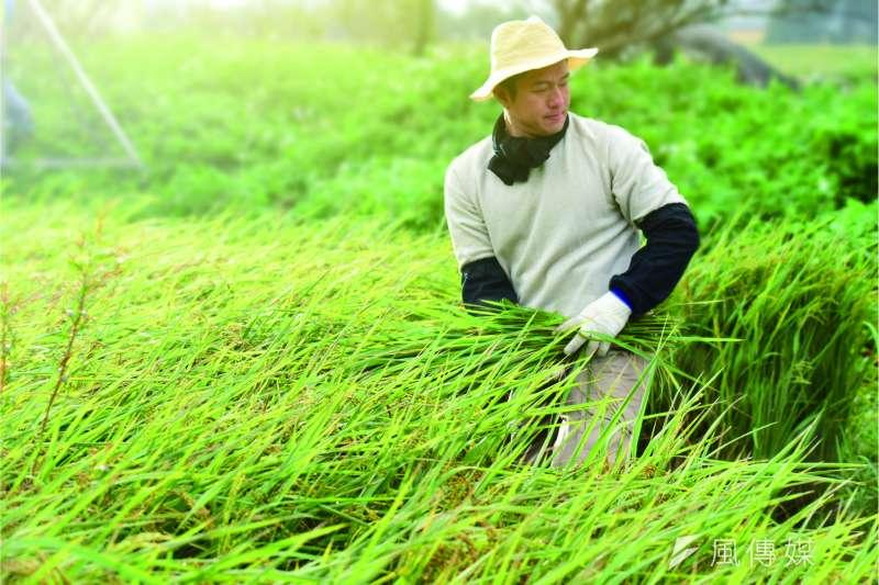 極端氣候對農業首當其衝,富邦努力推動農漁業保險,就是希望能填補農漁民損失。 (圖/富邦金控提供)