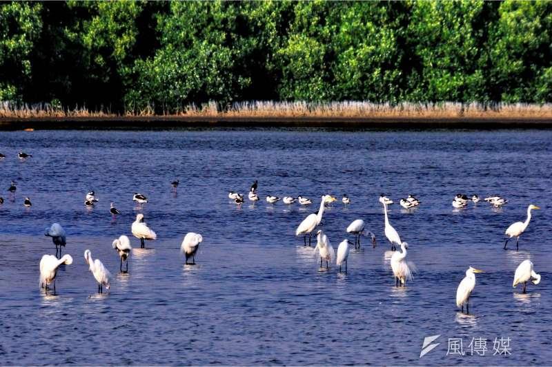 永安與茄萣濕地是南台灣黑面琵鷺重要的賞鳥景點。(圖/高雄市工務局提供)