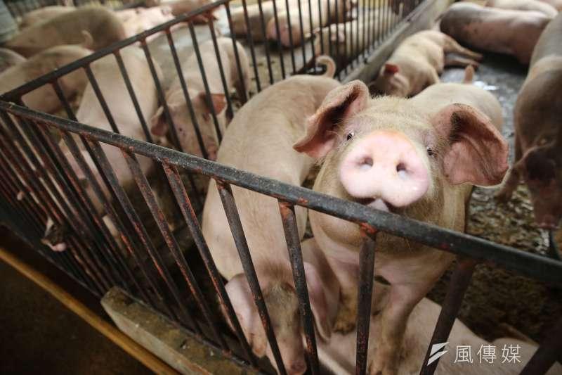 AIT準備接招網友提問,有網友針對美牛美豬議題直言,「為何要台灣人吃瘦肉精?」(新新聞資料照)