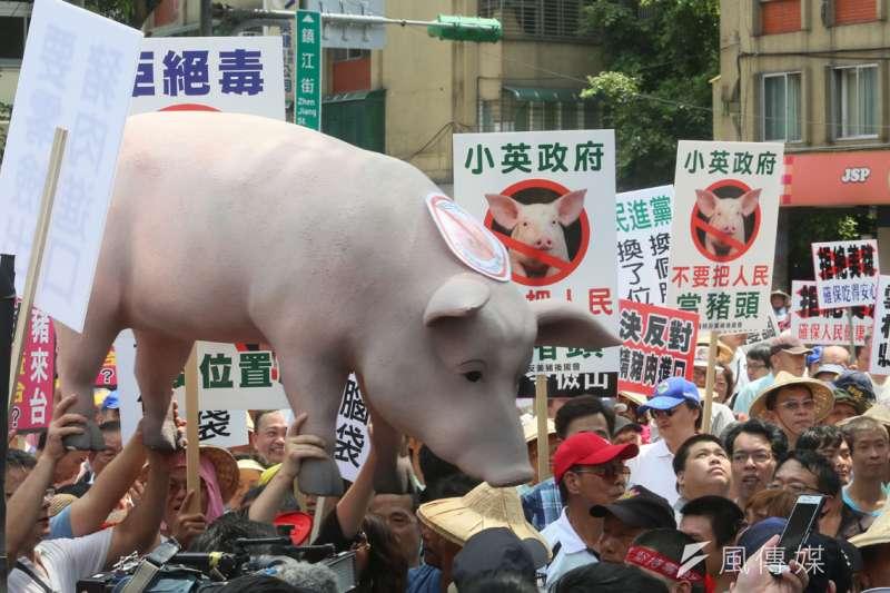 蔡政府處理美豬進口,被罵換了位置換了腦袋。(柯承惠攝)