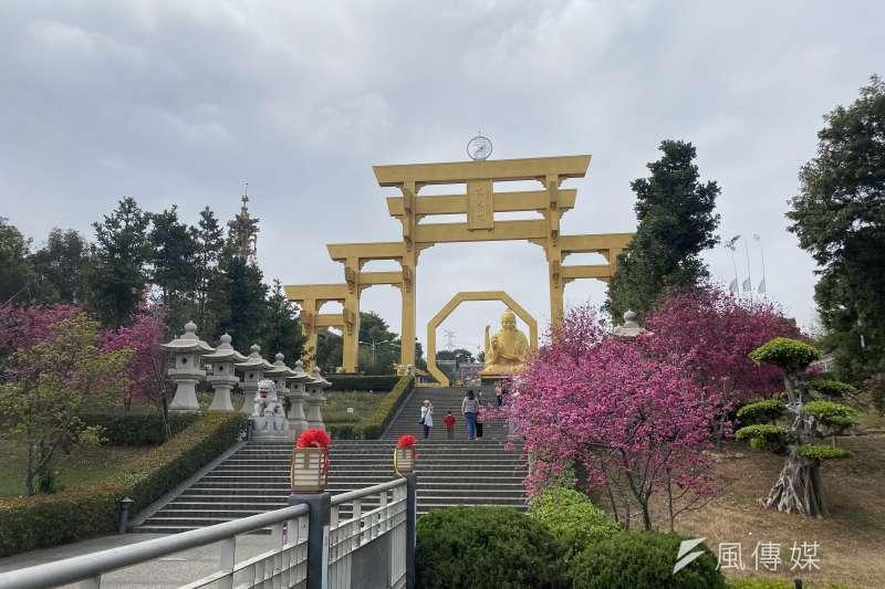南投易經大學校區內櫻花盛開。(圖/王秀禾攝)