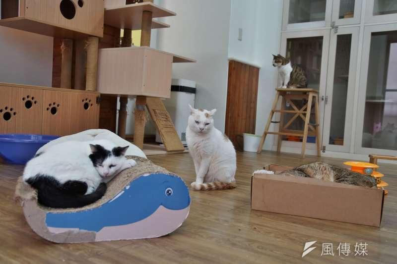 20210223-拼圖喵中途之家23日接受《風傳媒》採訪,工作團隊善待每一隻貓,要為流浪動物找一個溫暖的歸宿。(盧逸峰攝)