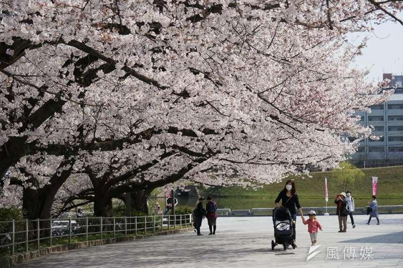 出國自由行短期內恐回不去了?圖為遊客在日本福岡大濠公園賞櫻。(資料照,盧逸峰攝)