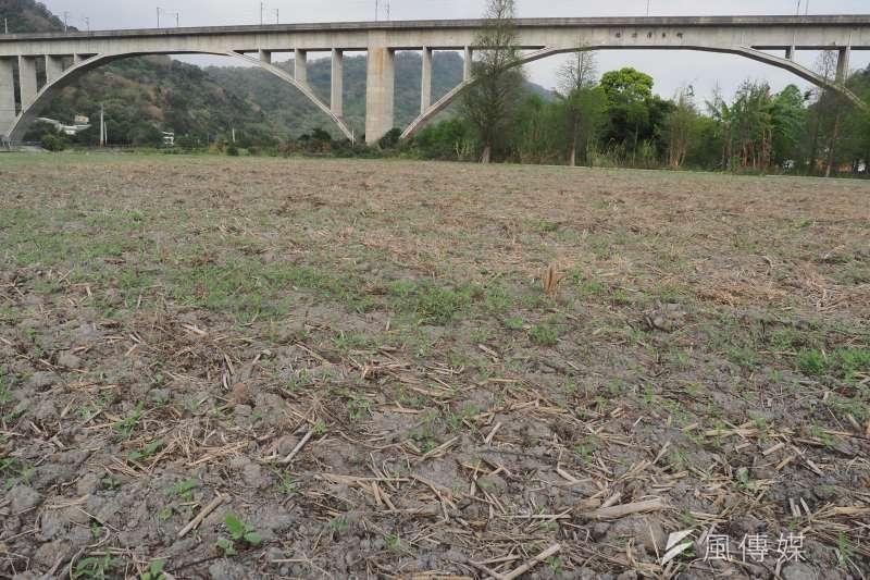 上半年台灣面臨嚴重乾旱季,位於苗栗鯉魚潭水庫下的三義鯉魚潭村,超過一百公頃的稻作因缺水休耕,原本應是一片綠油油的稻田在缺水期成為一片枯地。(柯承惠攝)