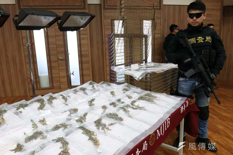 20210421-法務部調查局21日召開記者會,宣布查獲國內大麻植株最高紀錄,市值估計約5億元。(蘇仲泓攝)