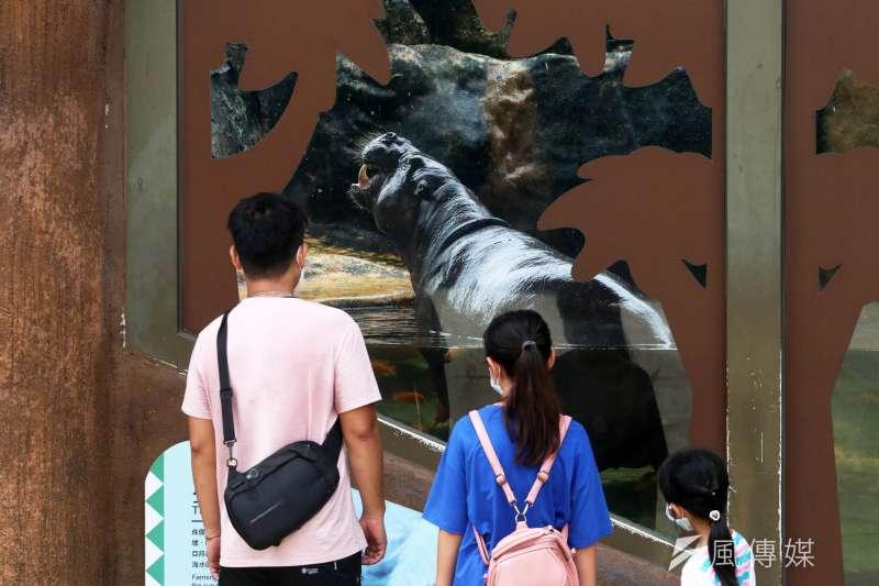 20210801-動物園內的侏儒河馬。(蘇仲泓攝)
