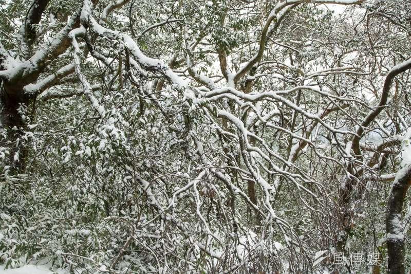大屯山鞍部氣象站4日早晨停下冰霰,因此101甲線自上午8時30分解除雪鏈管制。如有再下冰霰或下雪,再視路面狀況管制。(資料照,顏麟宇攝)