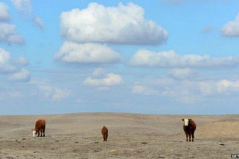 美國加利福尼亞洲針對乾旱實施限水措施。(BBC中文網)